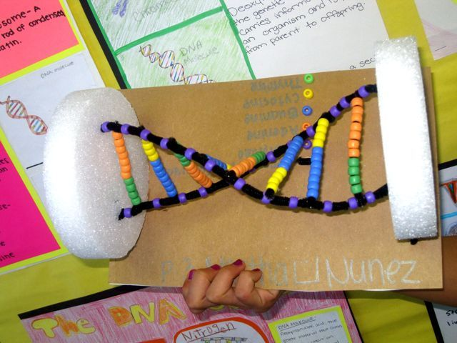 dna science fair projects Science fair, two words that terrify educators, students, and parents if your child  or school is participating in the science fair this year, don't panic if the right.