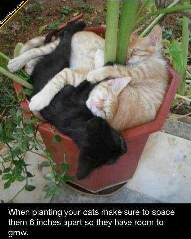 When Planting Your Cats Make Sure To Space Them | Click the link to view full image and description : ) So funny
