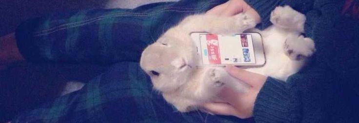 In Asia l'ultima strana moda: conigli vivi come cover per gli smartphone