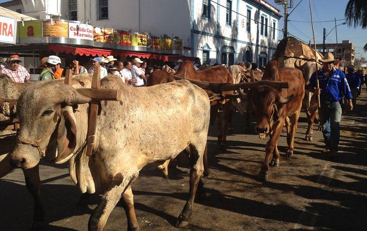 carro de bois | FOTOS: veja imagens do desfile de carros de boi em Trindade - fotos em ...