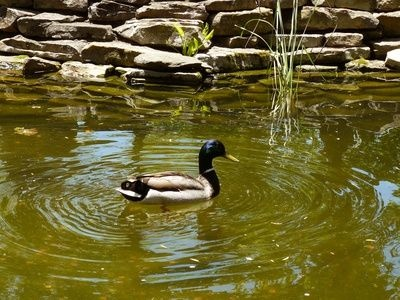 Homemade filter for a duck pond for Duck pond filtration