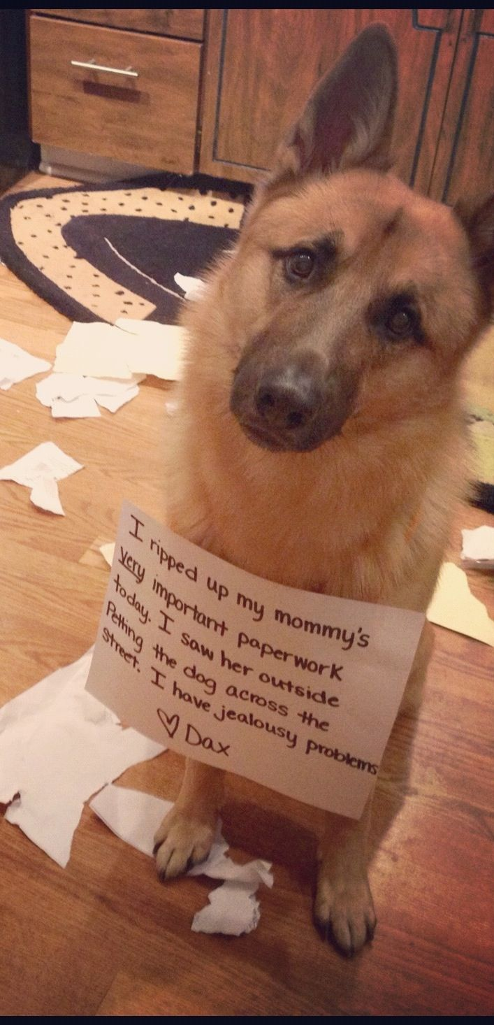 17 Best Images About The Best Of Dog Shaming On Pinterest