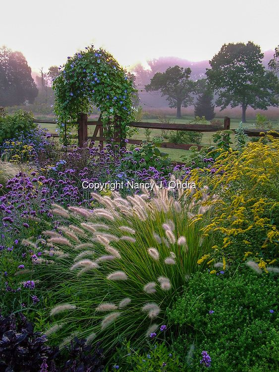 A country garden in fall (autumn) with flowers, herbs, shrubs, trees, ornamental grasses, an arbor (arch) covered with 'Heavenly Blue' morning glory, and fence