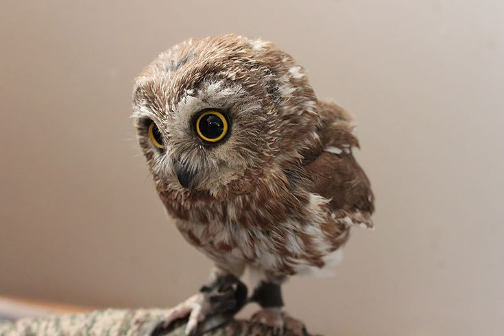 owl-photography-2__880