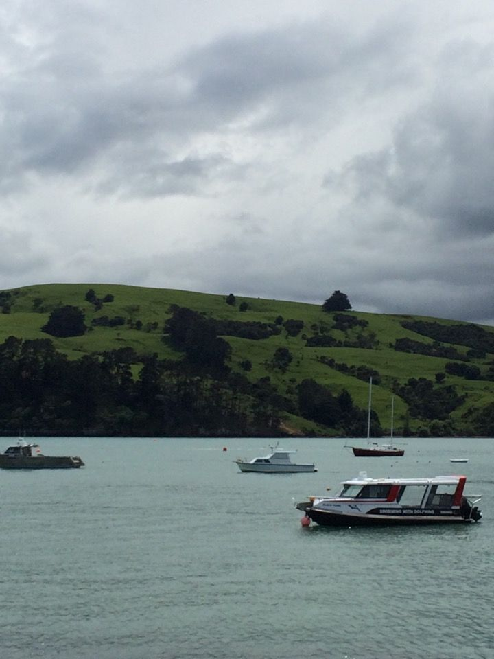 Akaroa Harbour in Akaroa, Canterbury
