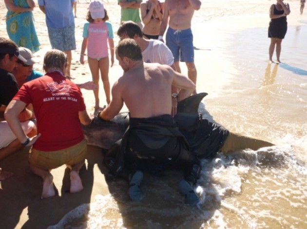 volunteer world international - marine project