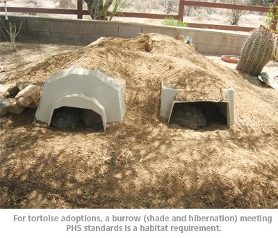 tortoise house - AGFD recommends an 18' x 18' reliably enclosed habitat, preferably a grassy area in which native desert plants or shrubs are already growing or can be planted.