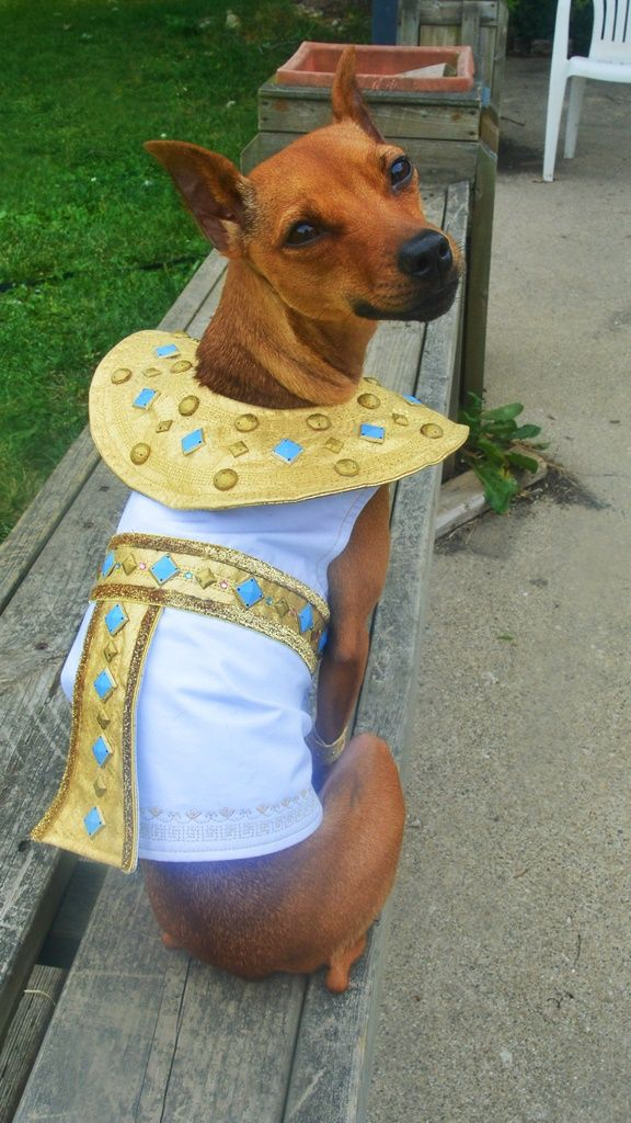 13 best Halloween costumes for 3 images on Pinterest ...