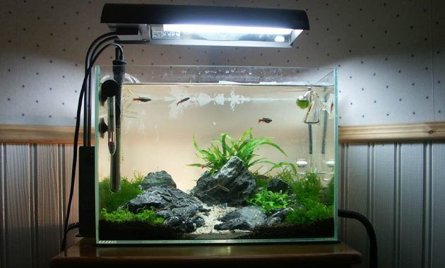 How To Set Up Simple Aquascape With Iwagumi Style Iwagumi Aquascape Is The Style Introduced By Aquarist Takas Aquascape Aquascape Aquarium Aquarium Fish Tank