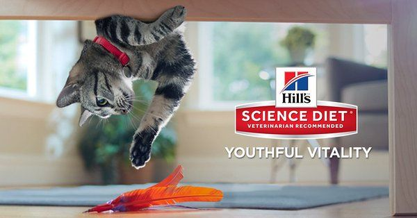 Enter for a chance to win 6 months free pet food + a $100 Petco Gift Card! https://www.quikly.com/1991-hills-pet-nutrition/t/i68cYeg-twt?utm_campaign=1991-hills-pet-nutrition&utm_content=1458&utm_medium=referral&utm_source=twitter #pets #sweeps