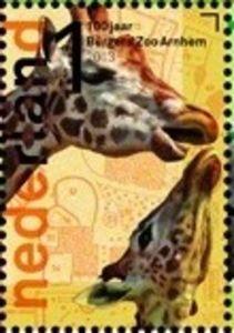 Rothschild Giraffe (Giraffa camelopardalis rothschildi)