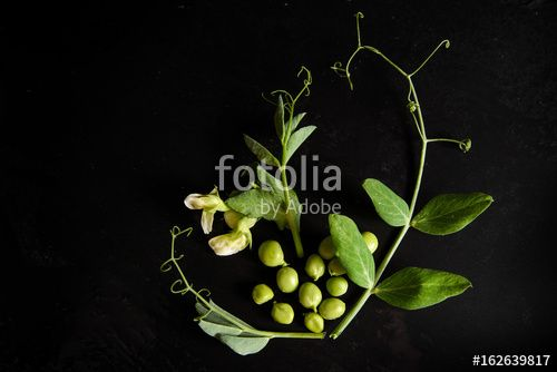 "Download the royalty-free photo ""green peas heart on  black background, flat lay, top view "" created by stillforstyle at the lowest price on Fotolia.com. Browse our cheap image bank online to find the perfect stock photo for your marketing projects!"