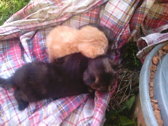 Koťata narozena 1.9  2015