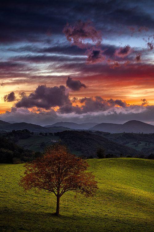 Lone tree and amazing sky  (by Rossana Dazzi)