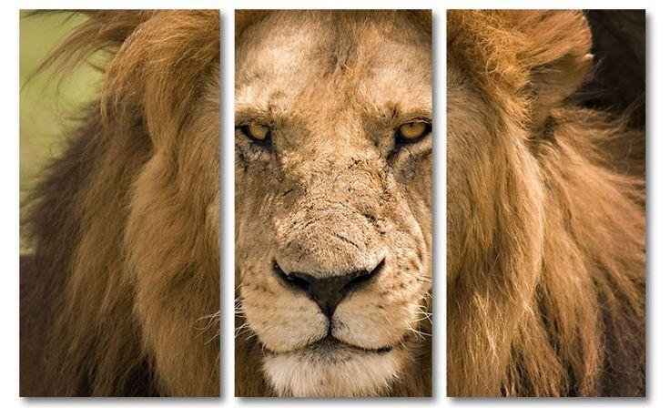 Foto schilderij leeuw op canvas (drieluik)