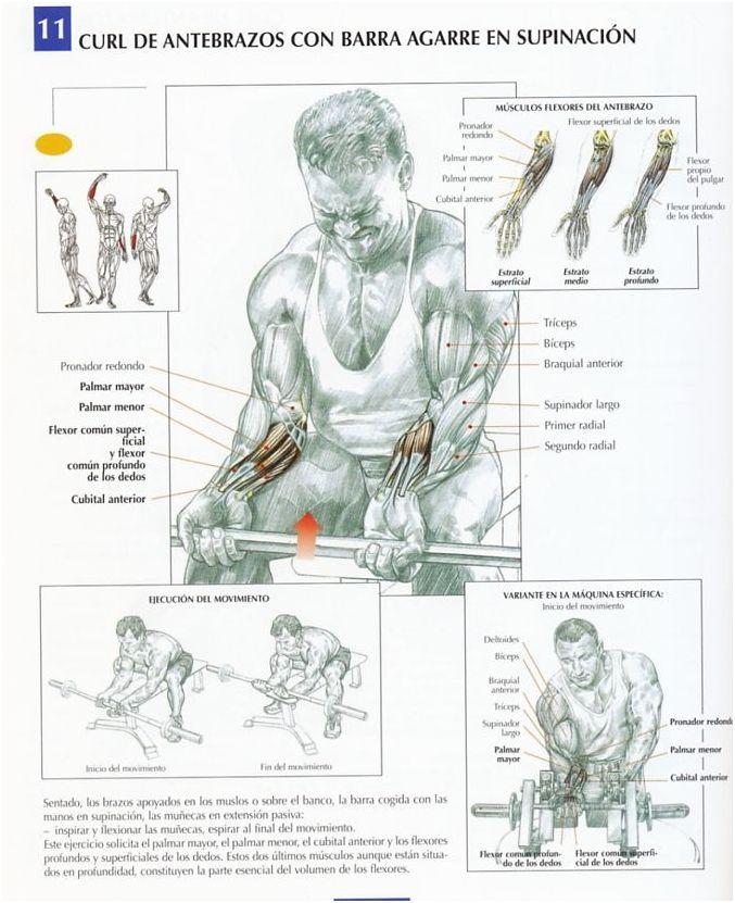 Curl de antebrazos con barra agarre en supinación - InfoCulturismo.com