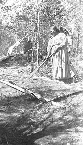 Drying wild rice on sheets of birch bark, Minnesota, 1910. photo by Frances Densmore (1867-1957)