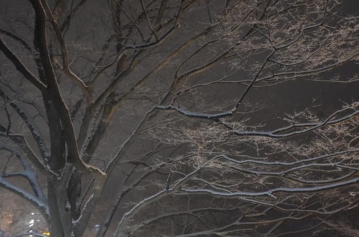 Snow in Namsan, last winter