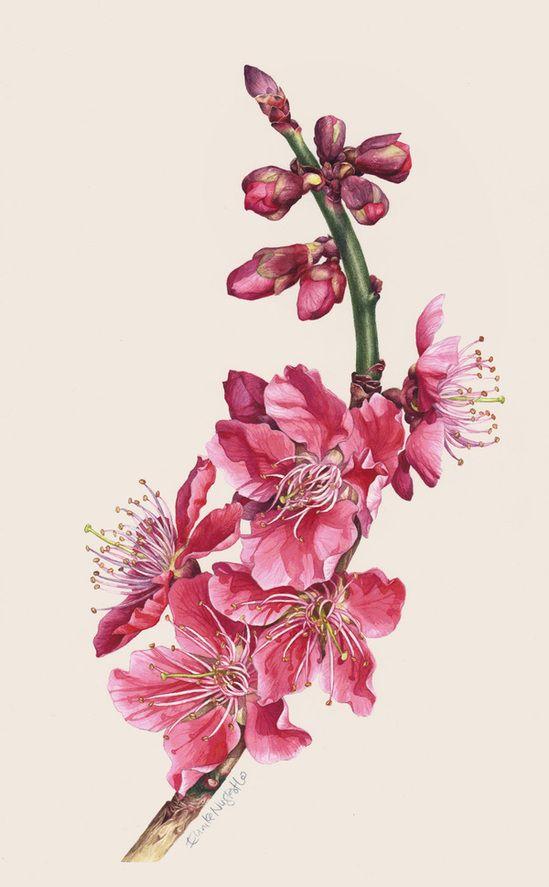 Cherry Blossm Botanical Portrait II - Gorgeous! by Eunike Nugroho, via Behance