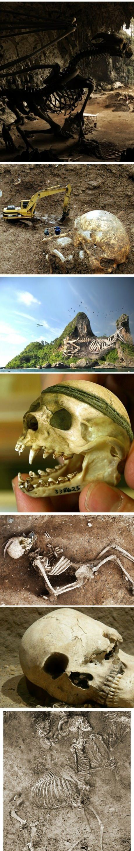 Very interesting Skeleton Fossils discovered around the World.