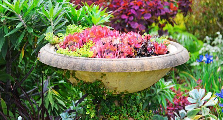 Create a succulent bowl