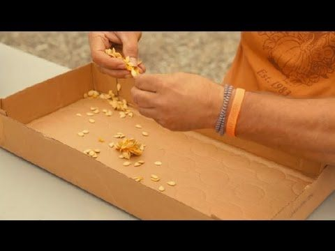 The Best Way to Preserve Pumpkin Seeds for Planting Next Year : Pumpkin Gardening