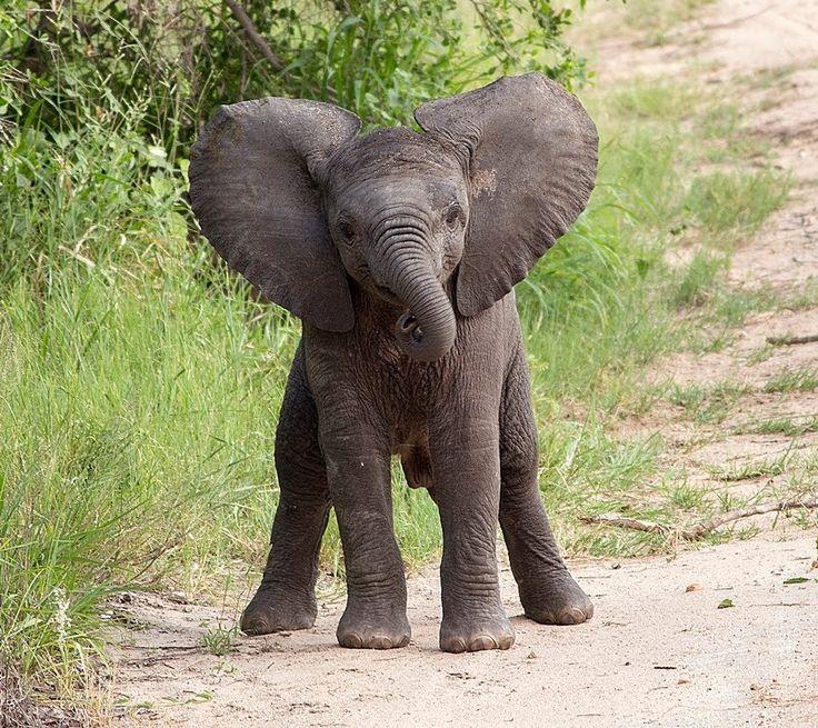 Baby Elephants Cute 18 best Cute Animal im...