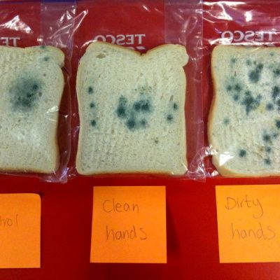 Food Safety Week 2011- What goes on behind closed doors?   Apple & Thyme