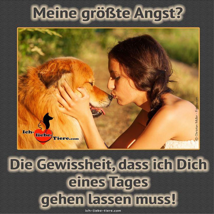 Meine größte Angst? Die Gewissheit, dass ich Dich eines Tages gehen lassen muss! >> http://www.ich-liebe-tiere.com/ <<