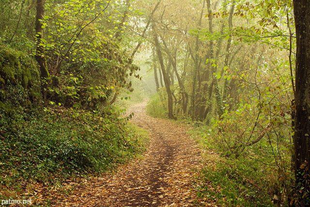 Photo d'un petit sentier à travers la brume matinale et les couleurs chaudes de la forêt à la fin de l'été