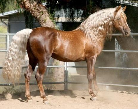 Morgan - A great looking horse.