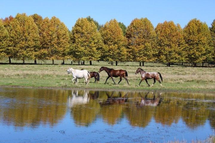 Horse reflection in the Midlands Meander http://www.n3gateway.com/the-n3-gateway-route/midlands-meander-association.htm