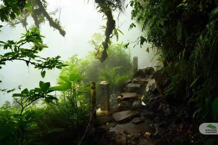 Hotspring waterfall at Mount Gede