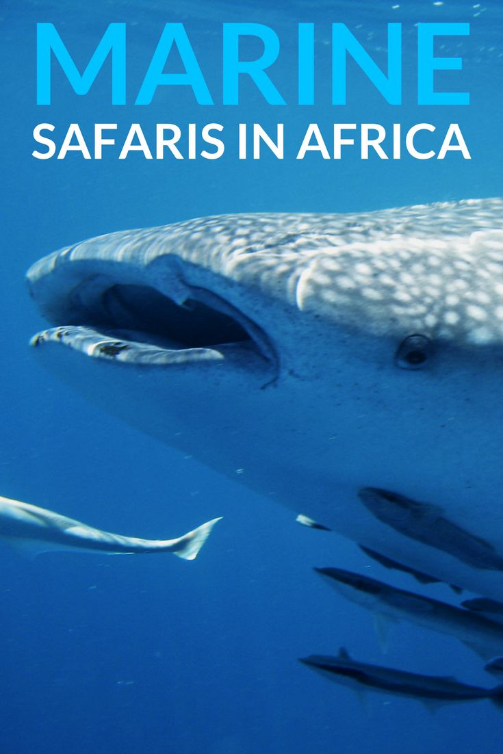 Dive off into the cool waters surrounding southern and eastern Africa. Rich in marine life and gorgeous coastline, here are some suggestions on getting the best out of a water-based safari. #marinesafari #safari #africansafari