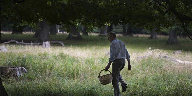 Tjek.dk guider til fem skove i Danmark, hvor du kan finde spisesvampe til gryden.
