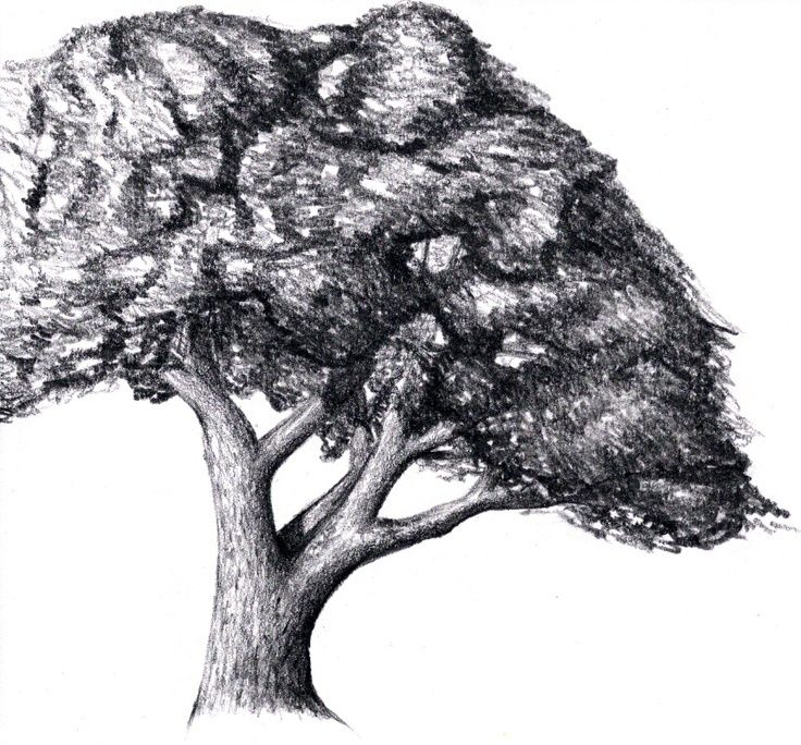 53 best images about trees how to draw on pinterest for Best tree drawing