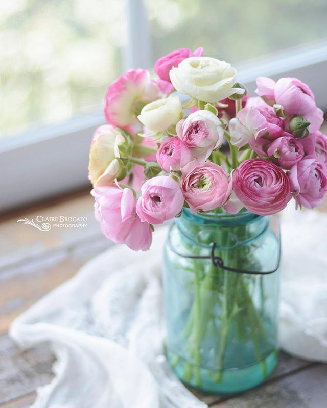 Ranunculus Mama Blumen Ranunculus Flowers Und Love Flowers