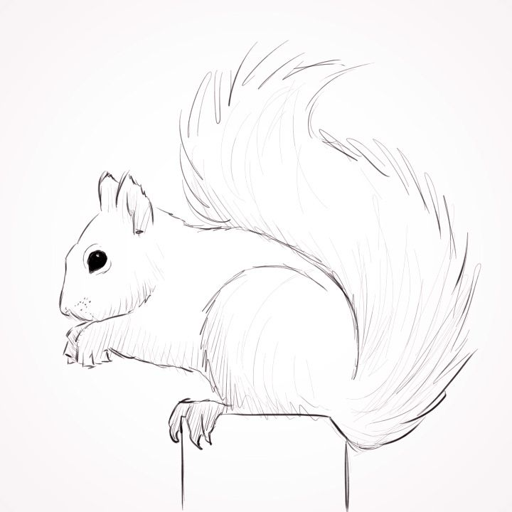 Line Drawing Squirrel : Best images about laura s art inspiration on pinterest