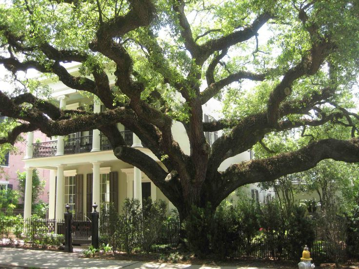 17 Best 1000 images about Garden District New Orleans on Pinterest