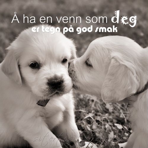 Å ha en venn som deg er tegn på god smak. To have a friend like you, is a sign of good taste.❤️