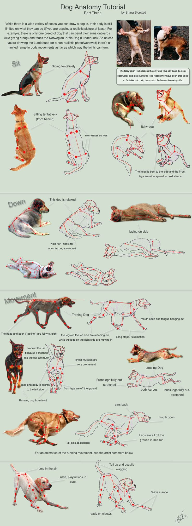 Dog Anatomy Tutorial 3 by SleepingDeadGirl.deviantart.com ✤ || CHARACTER DESIGN REFERENCES |