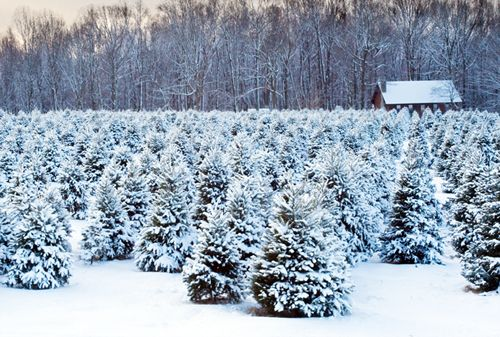A beautiful snowy day.  All bundled up.  The perfect Christmas starts with selecting the perfect tree.