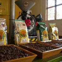 The Classic Britt Coffee Tour - Heredia Costa Rica. Costa Rica is known for its coffee, so why not learn about its production?