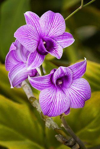 orquideas epifitas silvestres - Buscar con Google