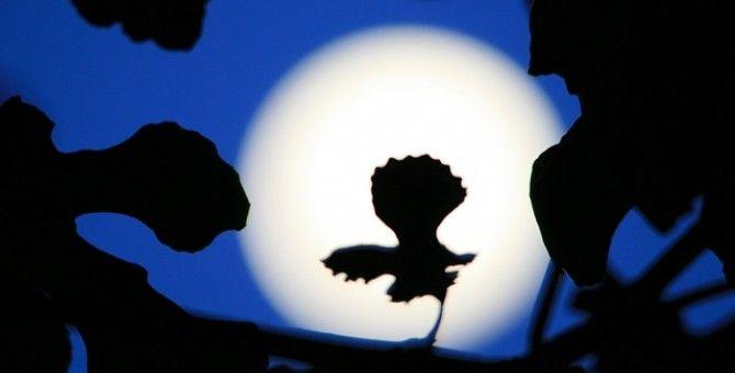Silver Moon Light