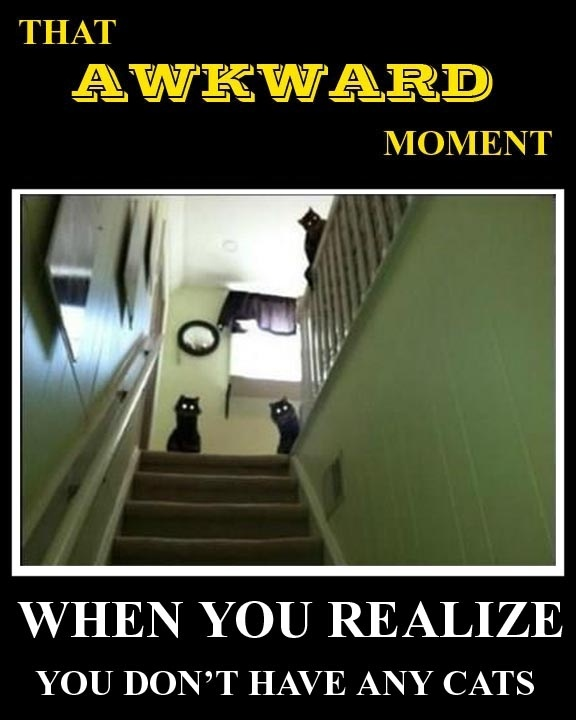 .: Cats, Animals, Awkward Moments, Funny Stuff, Humor, Funnies, Things, Black Cat