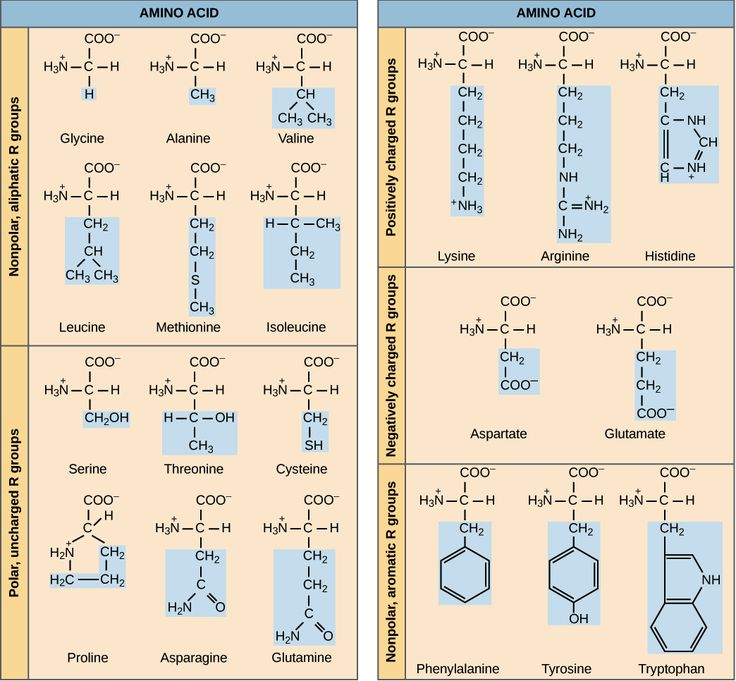 Best Biochemistry Images On   Biochemistry Sugar And