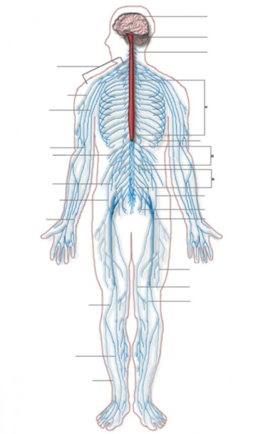 Many people all over the world are victims of peripheral neuropathy, a nerve related disorder. Awareness is one of the keys to deal with this condition. Here is an overview of peripheral neuropathy.