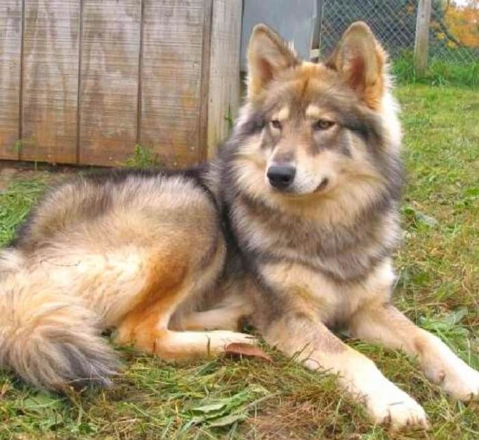 370 Native American Dog Names With Meanings Petpress In 2020 Native American Dog American Dog American Indian Dog