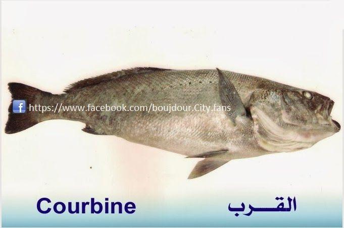 تعريف اسماء الاسماك بدلجة المغربية و الفرنسية البحار المغربي Fish Blog Posts Blog